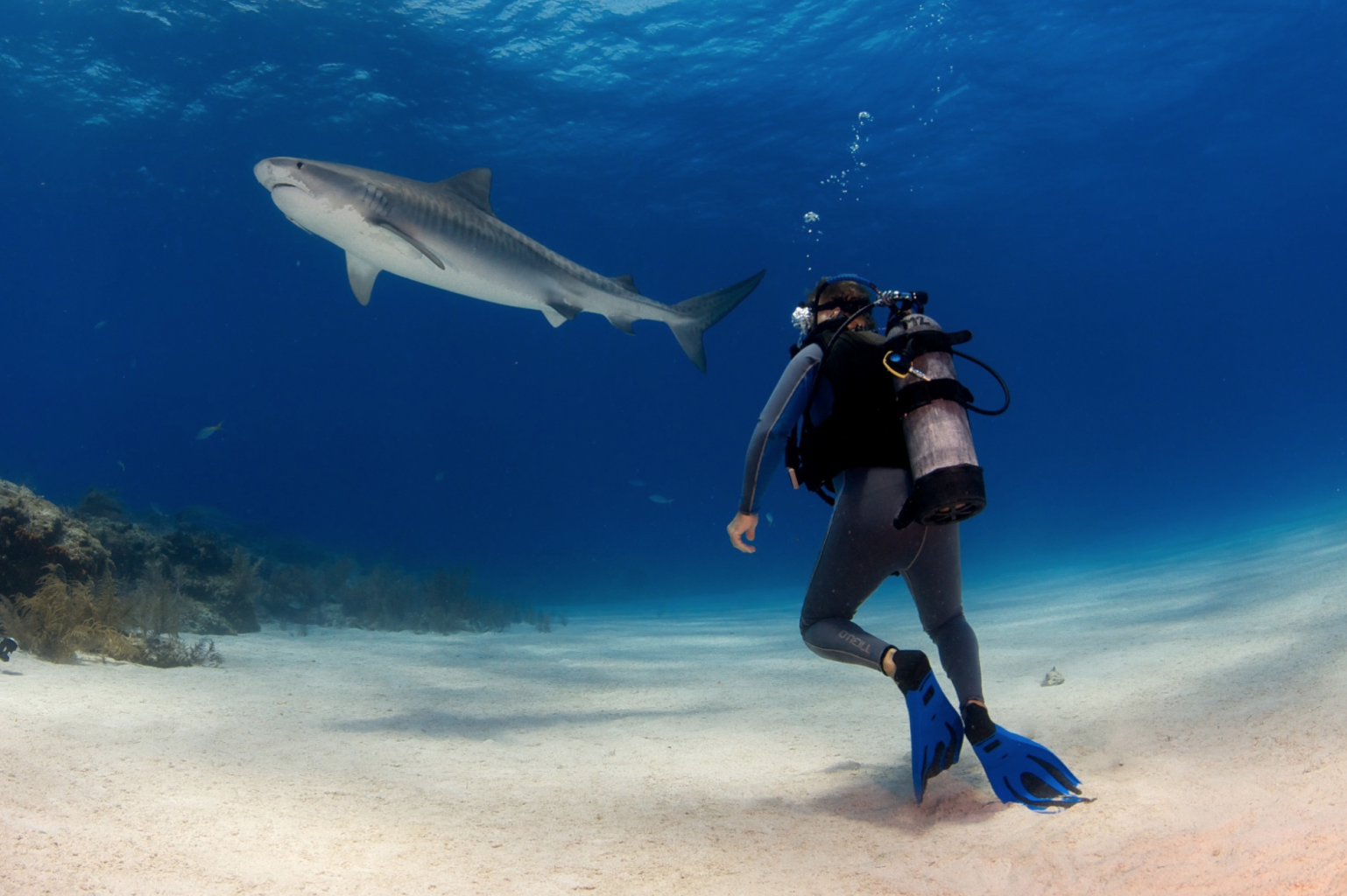Tiger Sharks, Bahamas