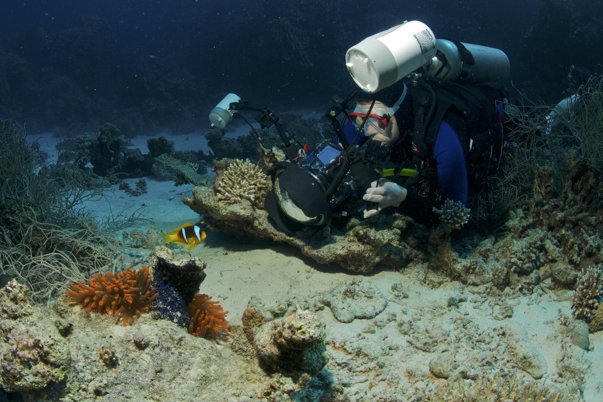 Underwater Photographer, Marsa Shagra Reef, Red Sea, Egypt