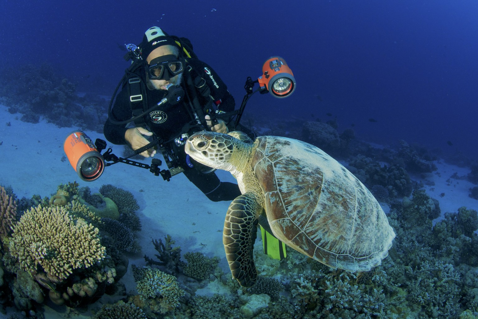 Sea Turtle & Underwater Photographer, Marsa Shagra Reef, Red Sea, Egypt
