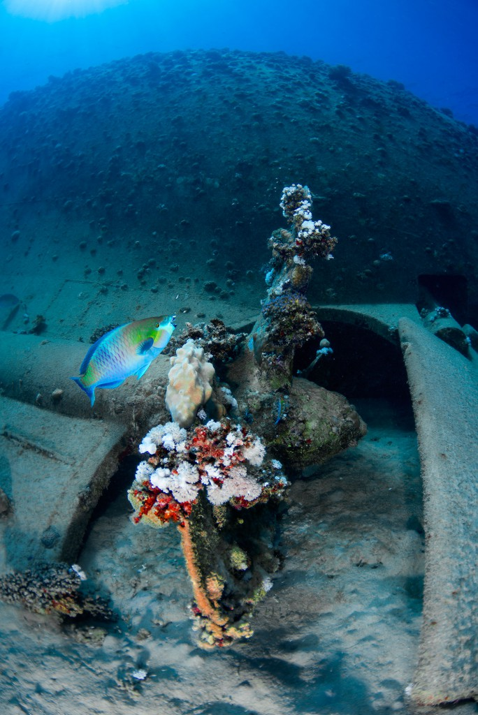 Freighter Wreck, Abu Ghusun, southern Red Sea, Egypt