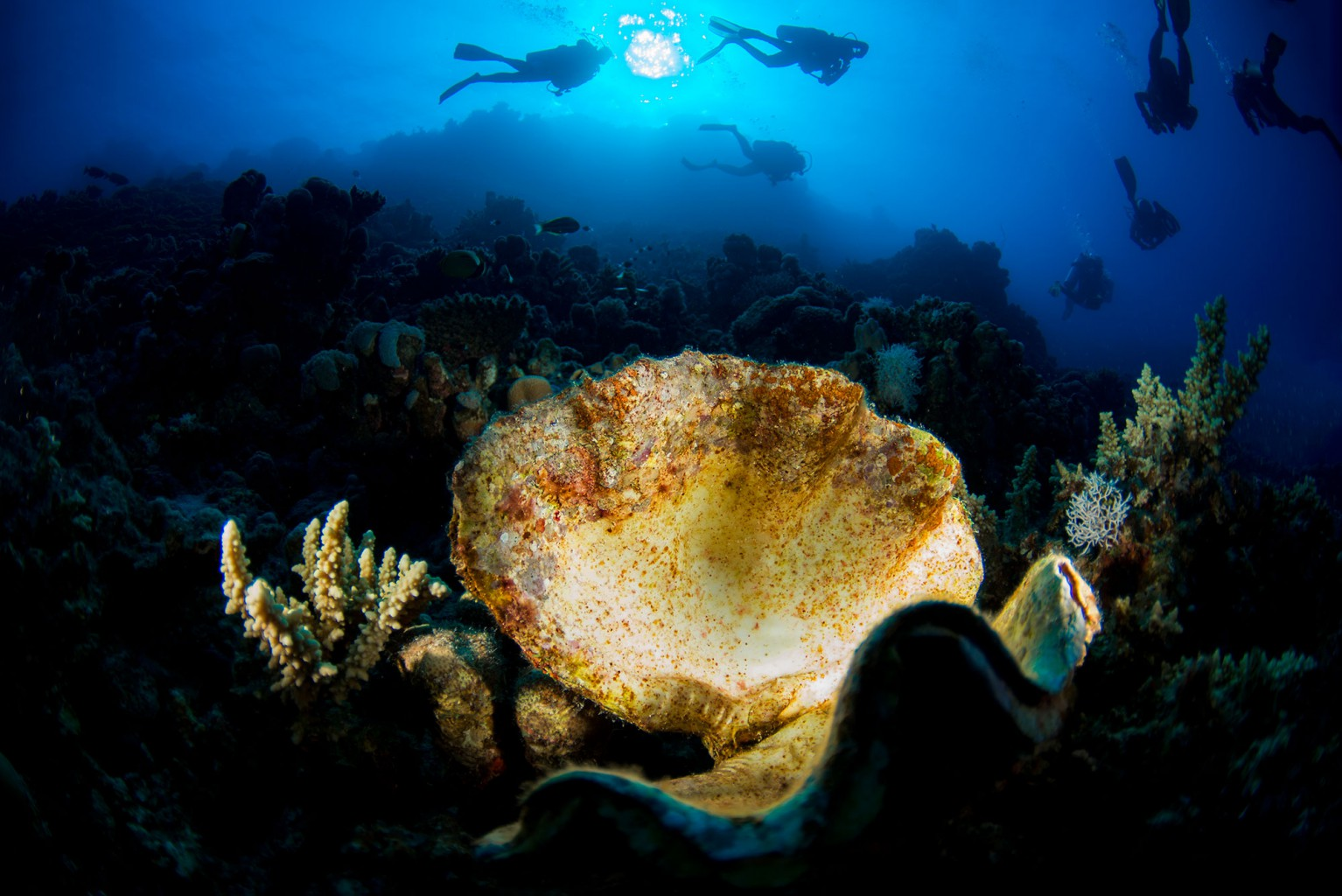 Marsa Shagra Reef, Red Sea, Egypt