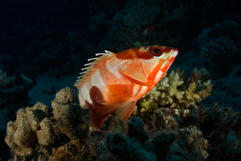 Souhtern Red Sea, Egypt