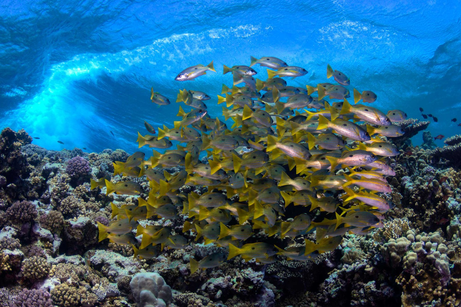 Marsa Shagra Reef, southern Red Sea, Egypt