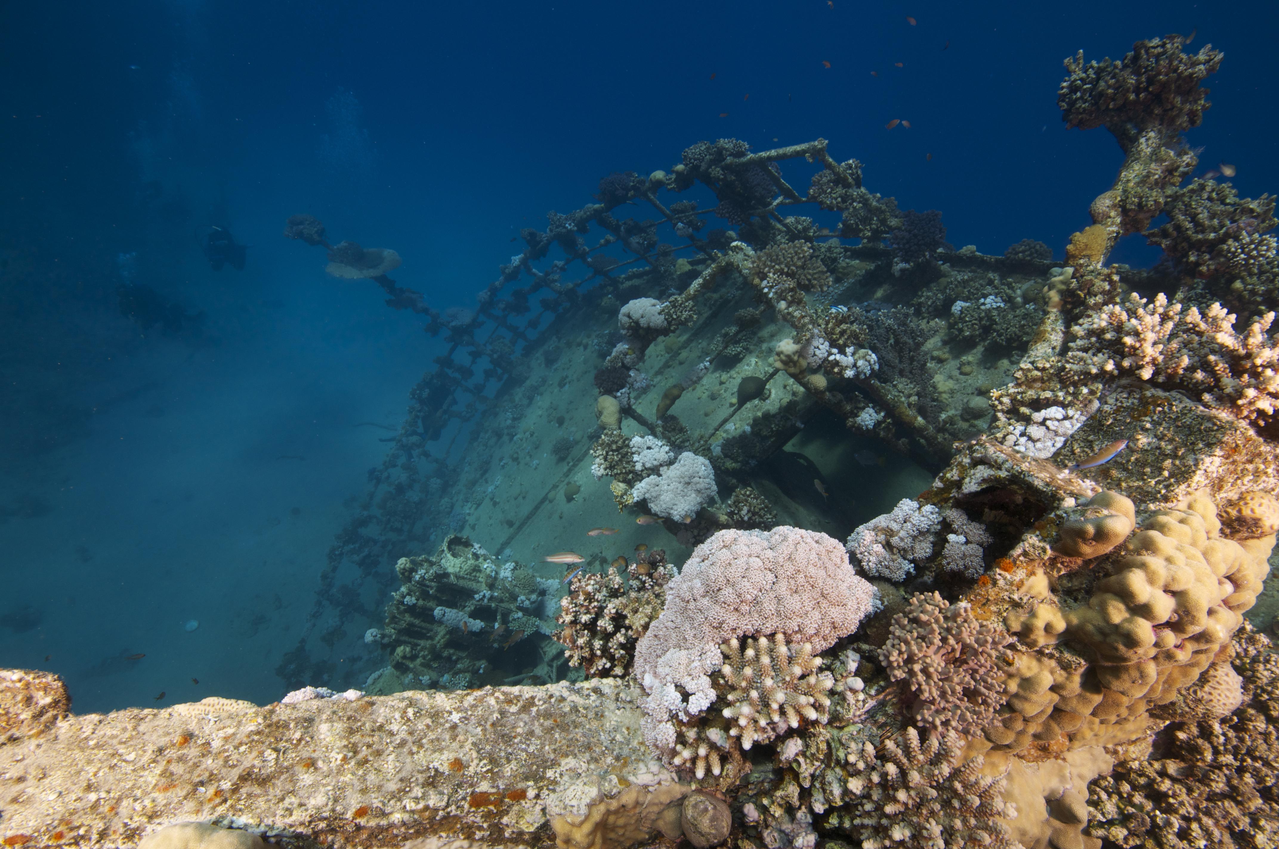 Freighter Wreck, Abu Ghusun, southern Red Sea, Egyptt