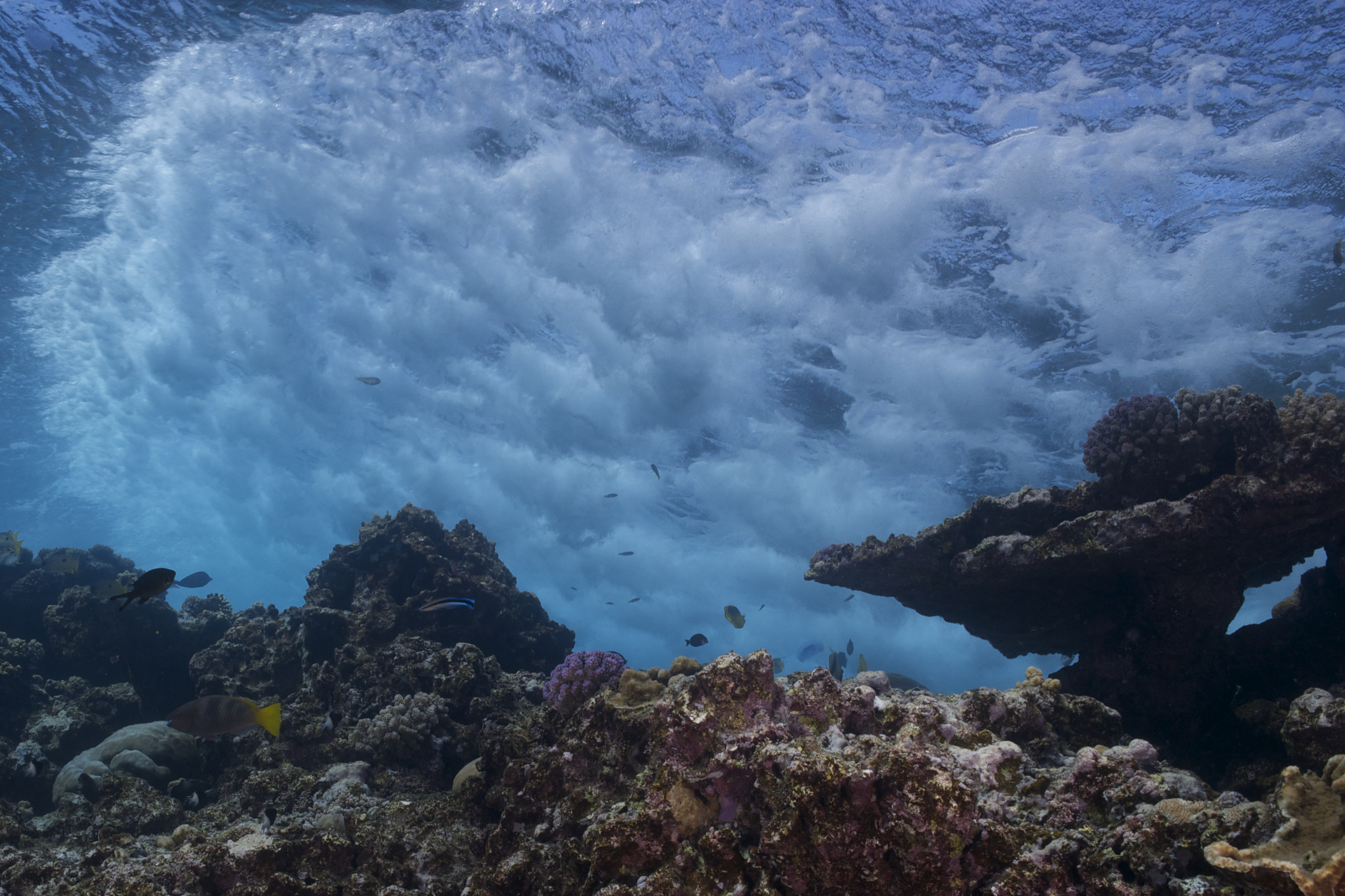 Elphinstone Reef, Red Sea Egypt