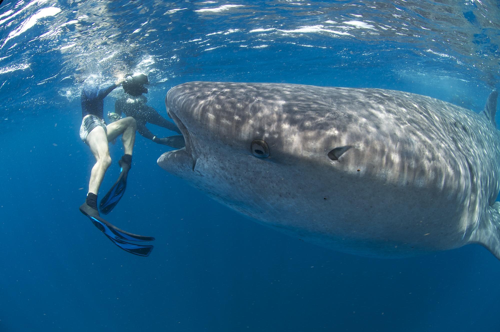 Mexico isla mujeres underwater fotodive photography - La isla dela cartuja ...