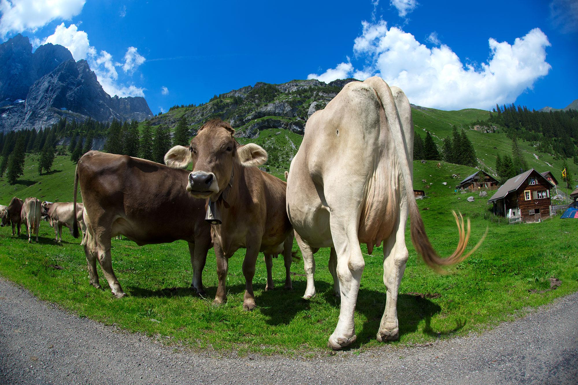 Brunnialp, Canton Uri - Switzerland