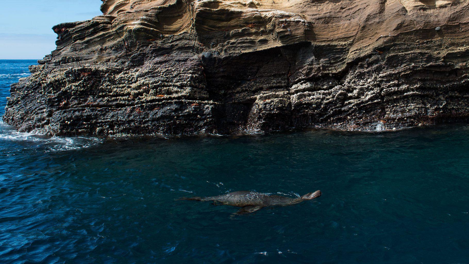 Galapagos Islands - Punta Vicente Roca
