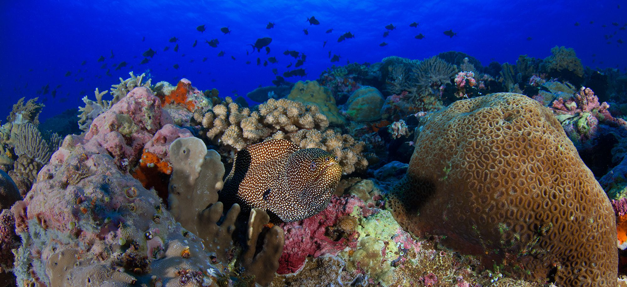 Indonesia, Banda Sea