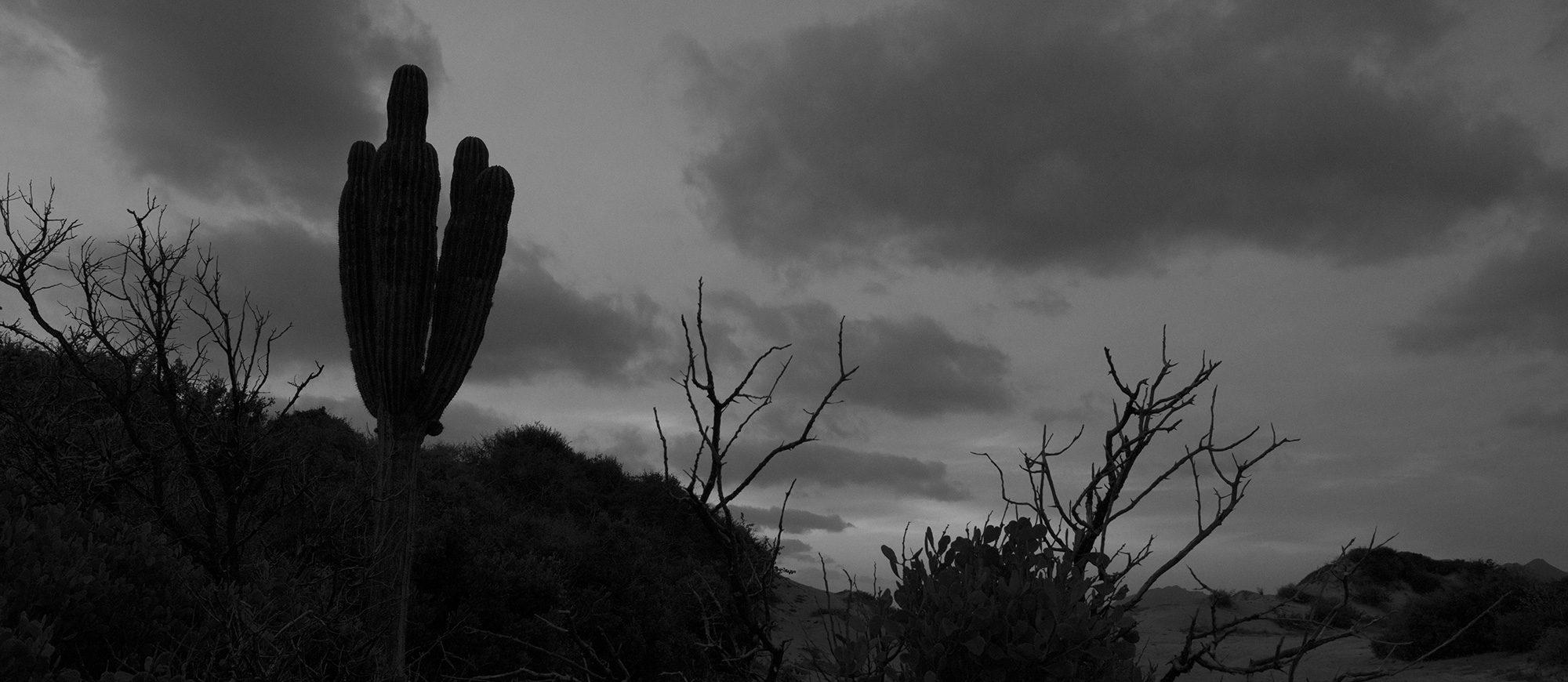 Cabo Pulmo National Park, Baja California - Mexico