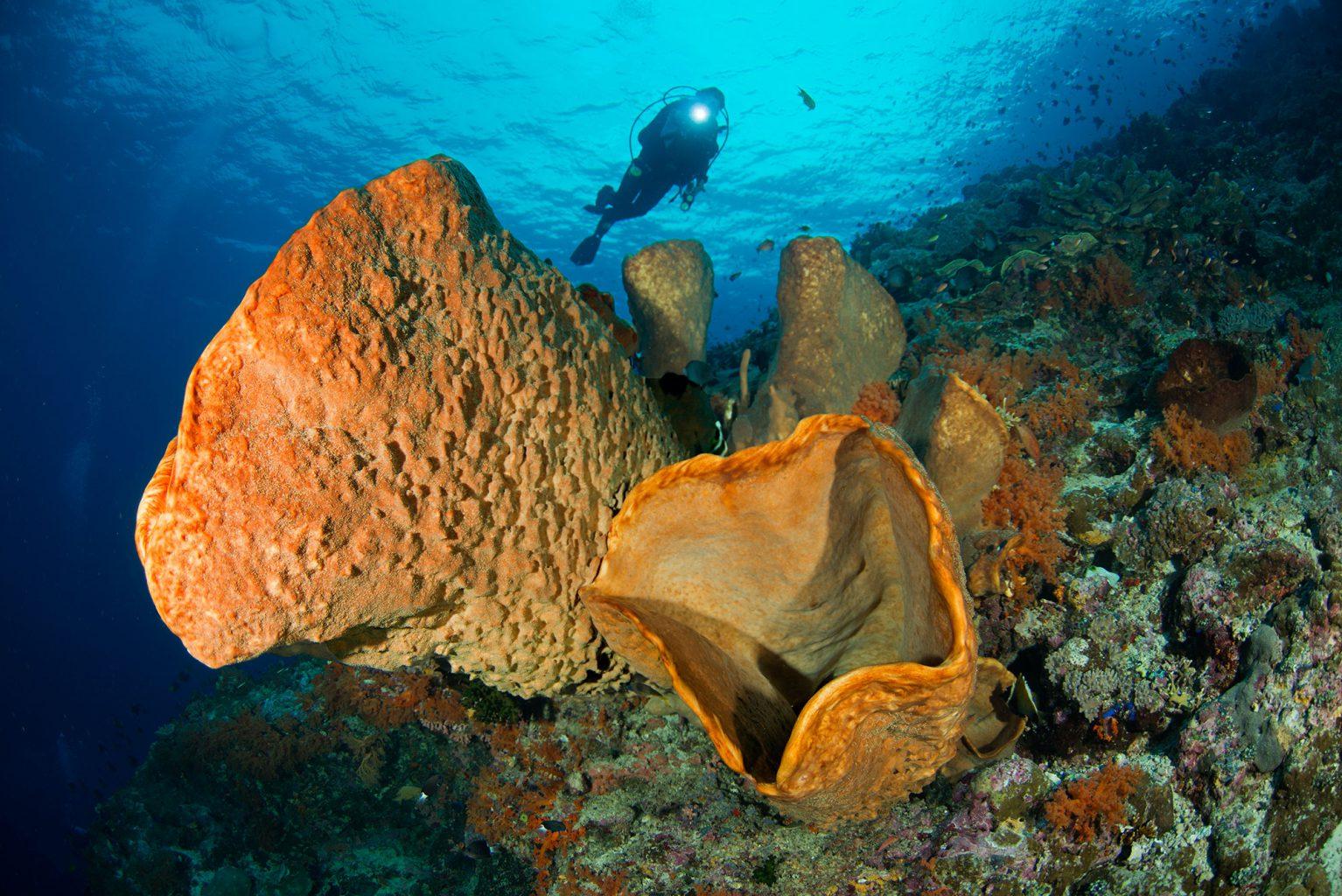 Indonesia, Banda Sea