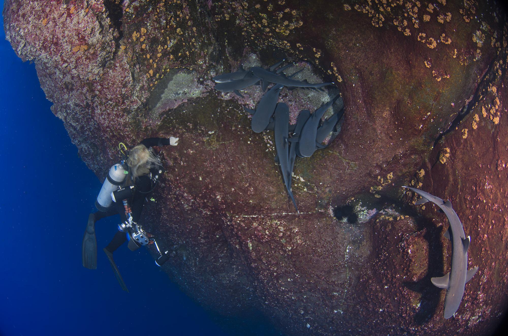 Roca Partida Revillagigedo ( Socorro ) Islands, Mexico