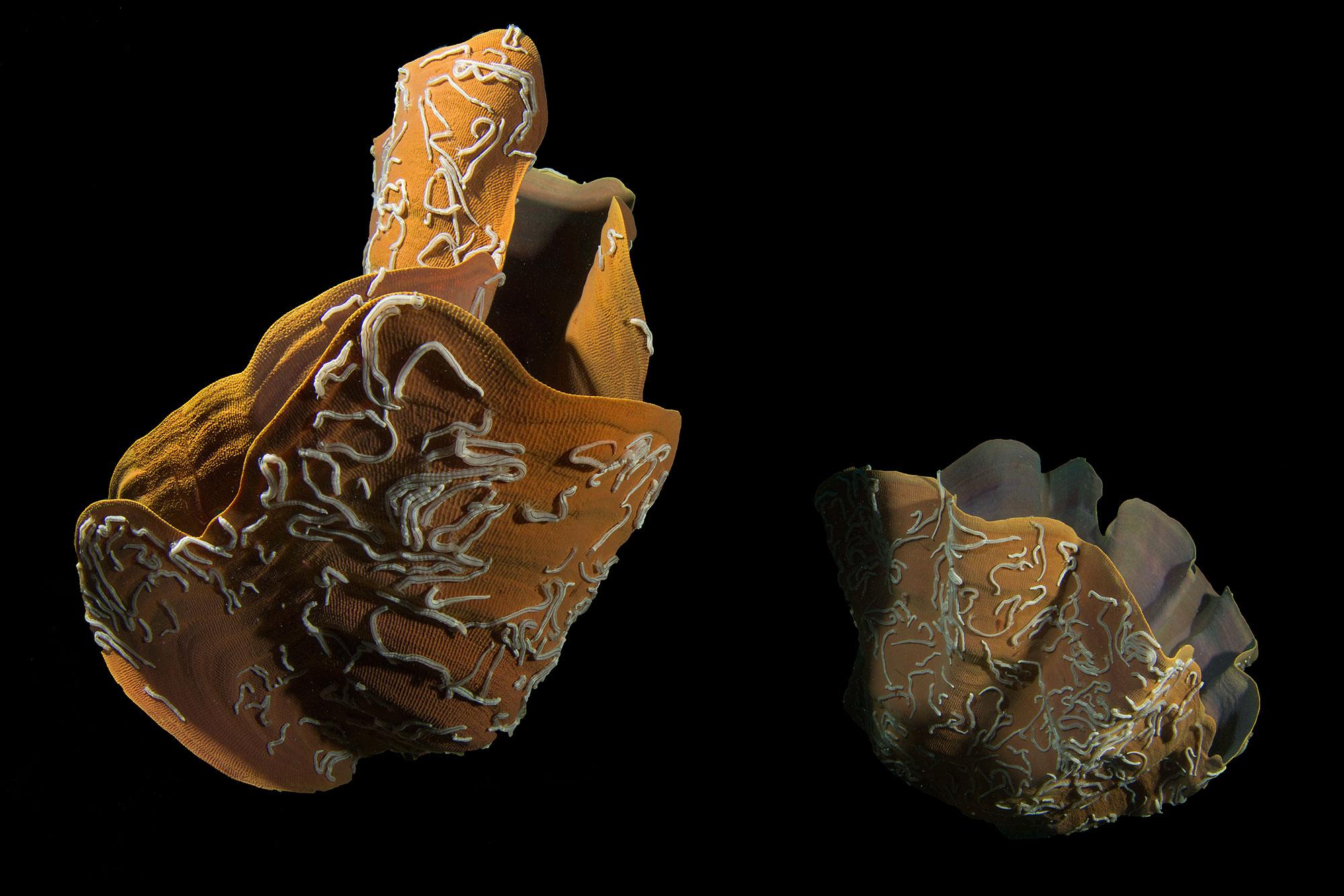 Raja Ampat Sponge Formations, Schwamm Formationen