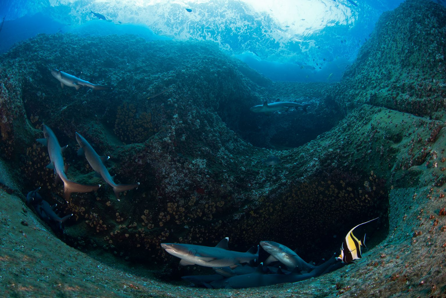 Roca Partida Revillagigedo ( Socorro ) Islands, Mexico