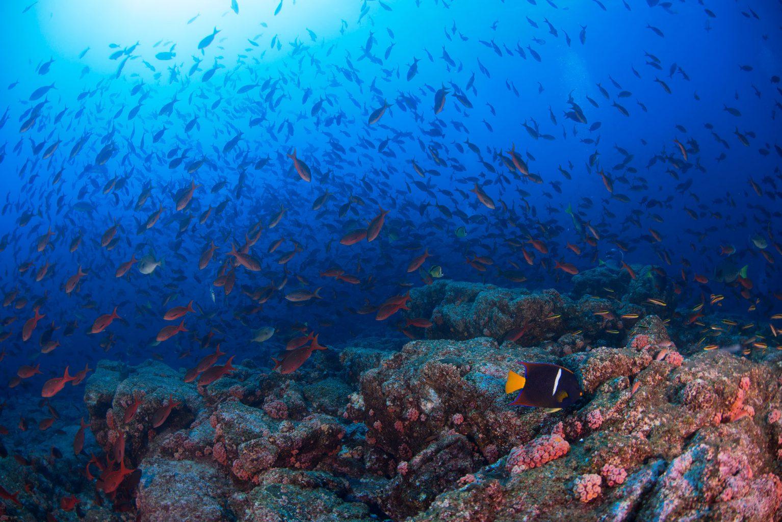 El Bajo, Sea of Cortez, Mexico