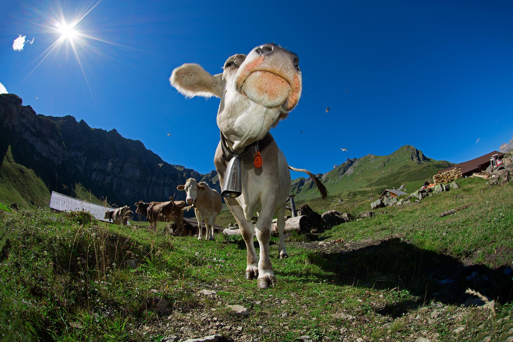 Sittlis Alp, Canton Uri - Switzerland