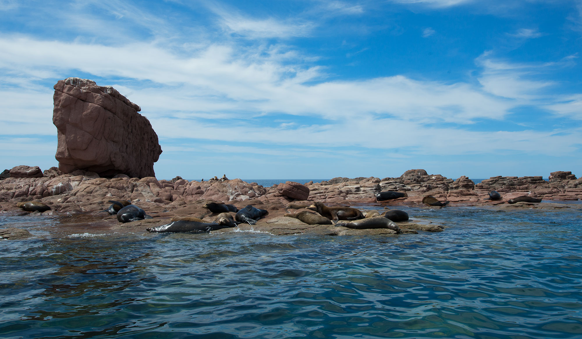 California Sea Lions at Los Islotes, Sea of Cortez, Mexico