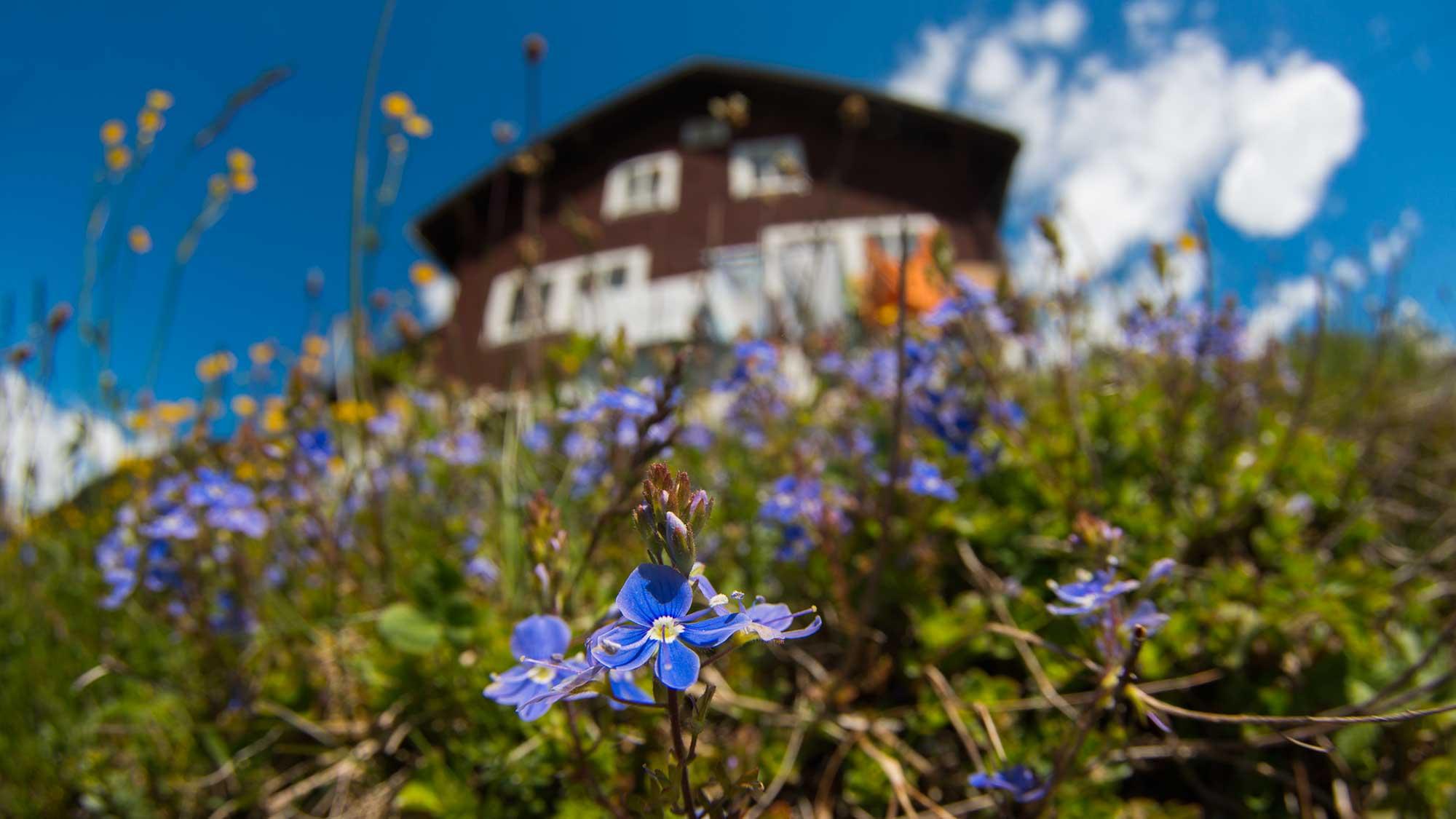 Golzerenalp, Canton Uri - Switzerland