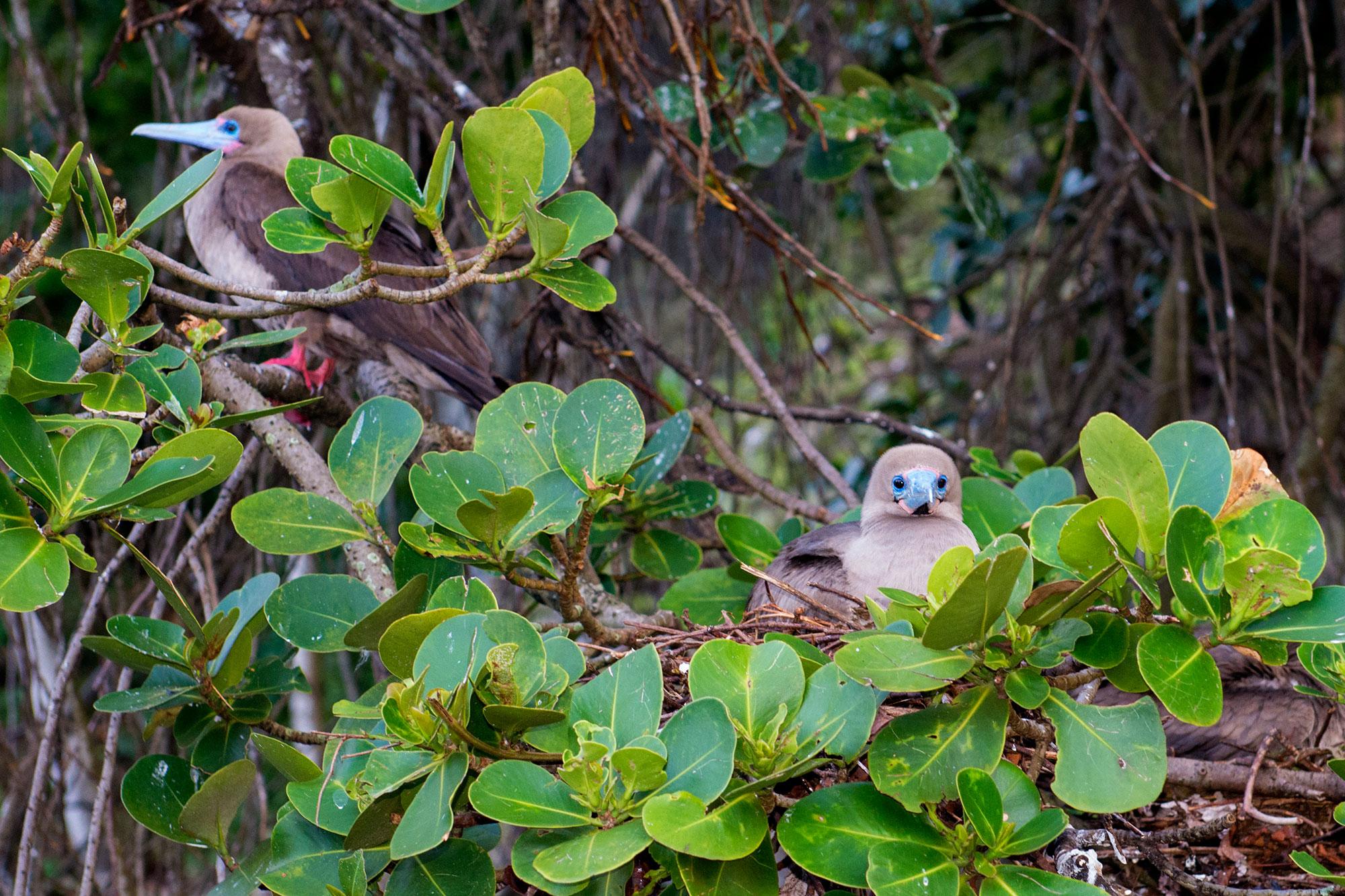 Cocos Island, Costa Rica