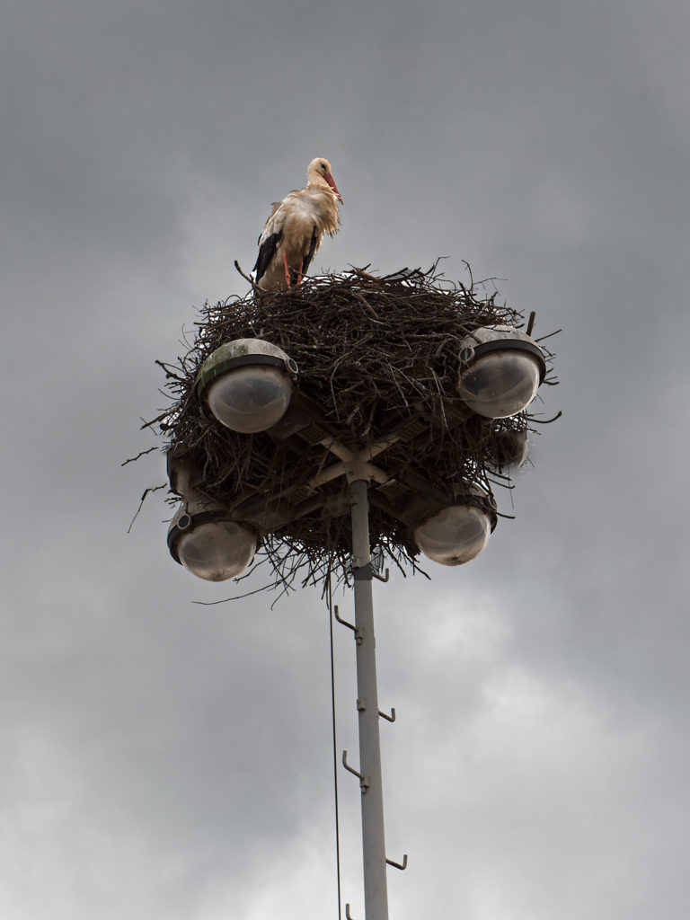 Storch`s Nest on a Lamp Pole in Morocco