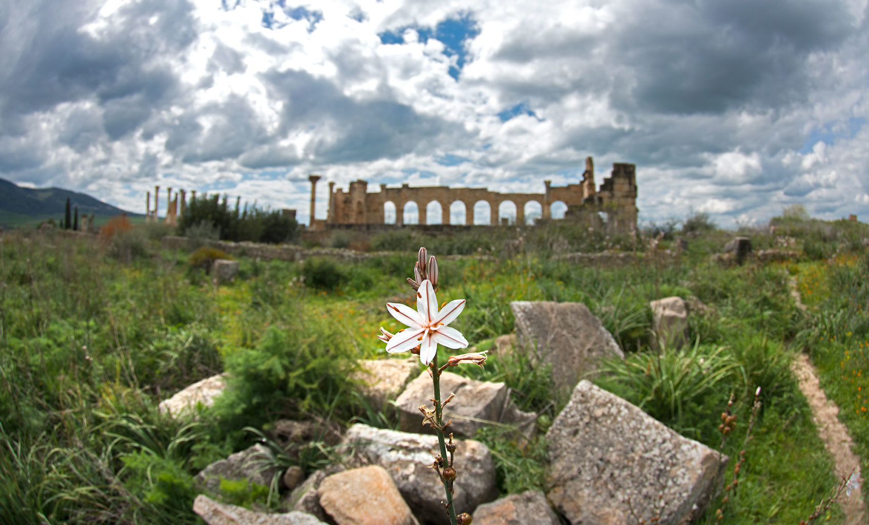 Volubilis Ancient Roman City Morocco