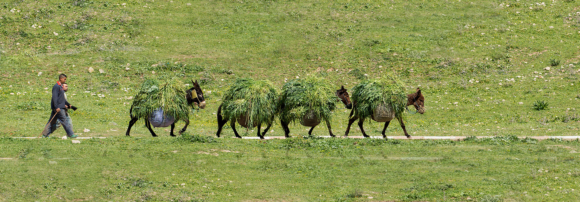 Farmer in Morocco