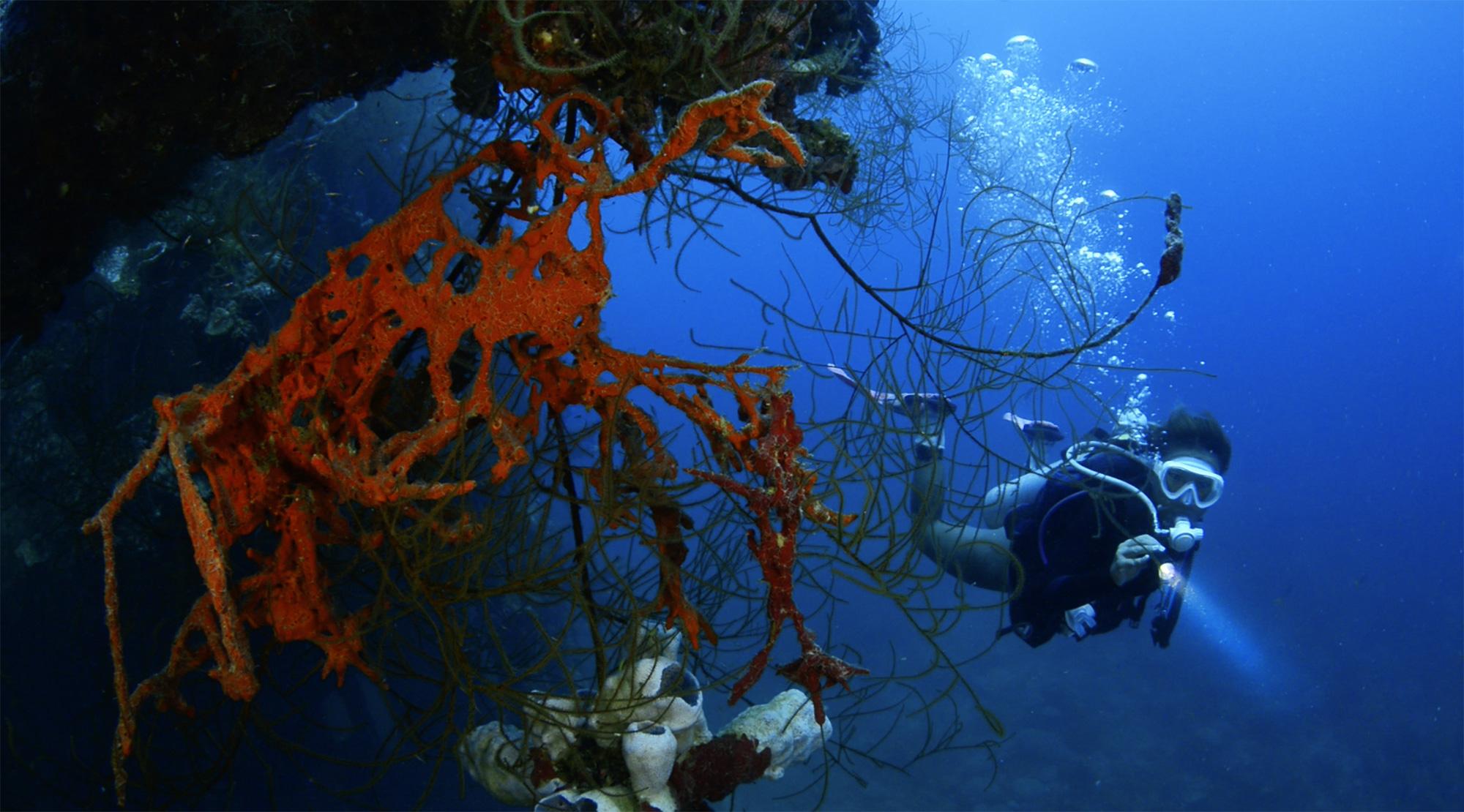 Japanese Shipwreck Palau